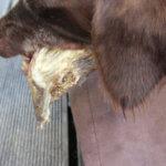 Hundesnack vom Reh - dem Hund schmeckts